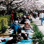 Drzemka po drzewem w ramach hanami