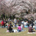 W parku na przedmiesciach Tokio