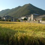 Miasteczko Inbe - wlasciwie wioska - pola ryzowe na kazdym kroku :)